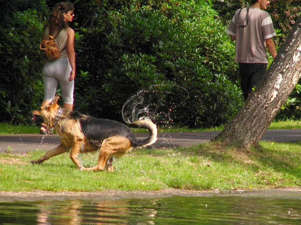 vysoký doprovod psí styl